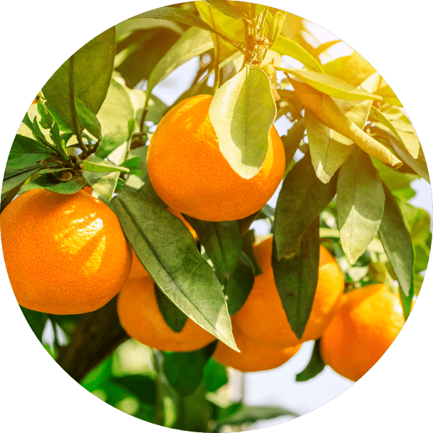 Find a Citrus Magic retailer near you